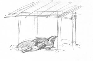 zoo2013_penguins